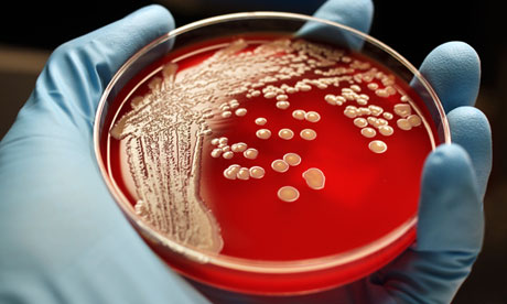 Hospital superbugs such as MRSA are some of the best know antibiotic-resistant diseases, but MPs were warned about infections such as gonorrhea and TB that affect the general population. Photograph: Getty Images